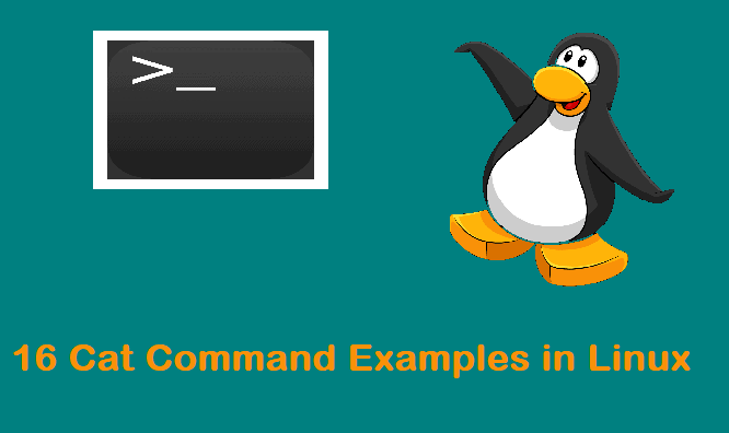 Cat-examples-in-linux